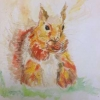 Squirrel (watercolour) by Sandra Casey 2016