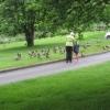 Feeding the ducks at Kings Pond