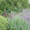 Herbaceous plants