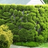 Sculpted hedge - photo by David Robinson