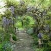 Wisteria arch - photo by David Robinson