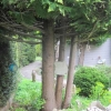 Stones training the trees