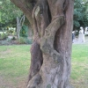 contorted unknown tree