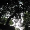 ?? unknown tree