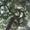 ? unknown tree