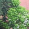 blossom tree opp comm cent