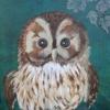 Baby Little Owl (acrylic) © Ann Bishton 2015