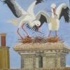Norfolk Storks Nest-Building ) © Ann Bishton 2014