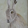Hare (watercolour) 2017 by Annabel Young