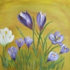 Spring Crocus © Annabel Young 2014
