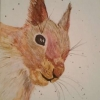 Red Squirrel (watercolour) 2017 by Annabel Young