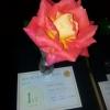 01 Single Rose