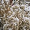 Dead grasses