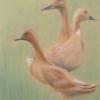 Ducks © Helen Davis 2014