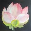 Lotus blossom © Helen Davis 2014