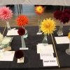 Single Dahlia entries