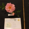 2nd for Best Single Rose
