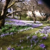 Helen Lamb's photo of back garden and house