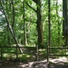 Dappled sunshine in the woods