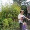 Bamboos  in the Oriental Carpet Garden