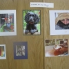 """Photography - """"A Member of the Family"""" - The Winner - Spaniel"""
