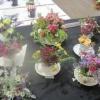 Floral Art - Arrangement in a Teacup