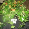 "Floral Art - Arrangement evoking a song or piece of music - ""The Holly and the Ivy"""