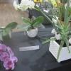 Flowers - Indoor Pot Plant