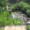 Lovely wild pond