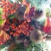 Wonderful colourful berries