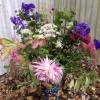 Sheila's outdoor arrangement