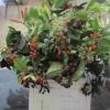 Floral Art - Autumn Jewels winner