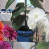 Indoor Pot Plant winner - Sheila Sorby