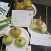 Three Onions winners