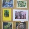 Photography - A secret corner of Beech