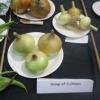 Group of three Onions