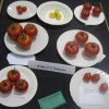 Group of three Tomatoes