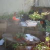 Sheila's Plant Stall outside