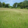 A view across the meadow