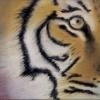 Bengal Tiger © Chris Davies 2014