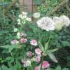 IMG_2861 (1280x960)