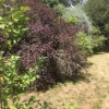 Colourful shrubs