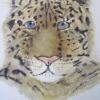 Amur Leopard © Jennie Revell 2014