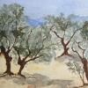 Olive Grove © Sonia Hennelly 2014