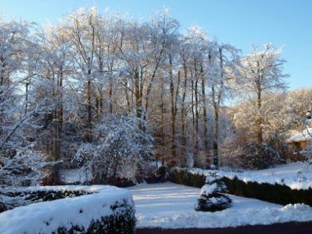 CB_snow_garden