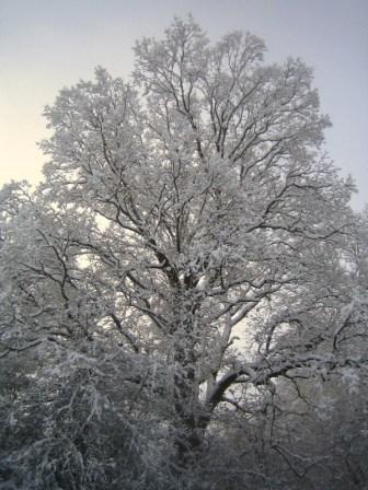 JT_Tree