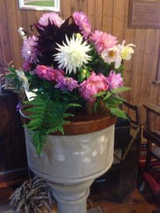 Beautiful Dahlias in the font