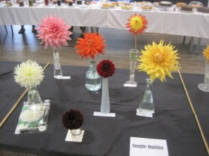 Wonderful Dahlias