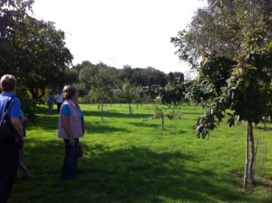 Young orchard