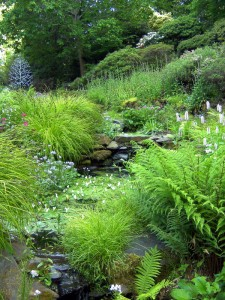 Ferns and bubbling stream